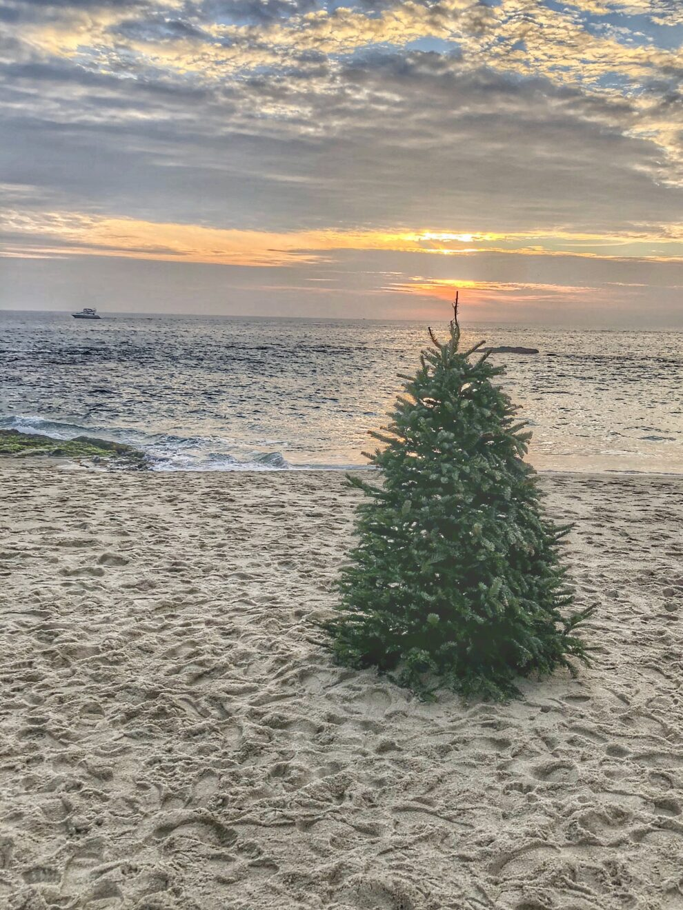 Only one decoration adorns this christmas tree the sunset of a beautiful day t20 lrapmb